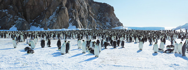 Foto auf AluDibond Pinguin Panorama of Emperor penguin colony( aptenodytes forsteri)on the sea ice of Davis sea,Eastern Antarctica