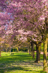 Beautiful park garden in spring. spring landscape
