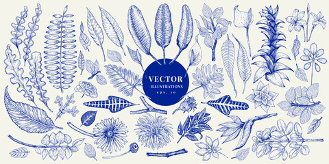 Vector botany collection. Retro hand drawn illustration set.
