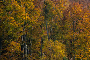 Beautiful autumn trees in the forest, everything is colorful and alive