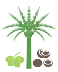 Coconut tree. Isolated coconut on white background