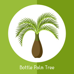 Bottle palm tree. Illustration of exotic tropical plant