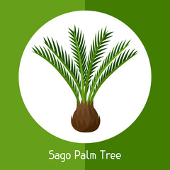 Sago palm tree. Illustration of exotic tropical plant