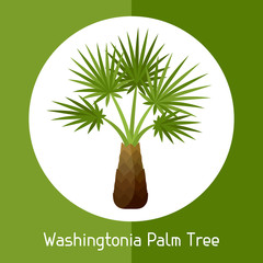 Washingtonia palm tree. Illustration of exotic tropical plant