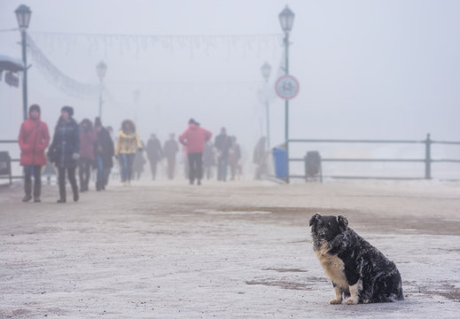 homeless dog with frozen fur sitting near the bridge in winter fog. blurred background with crowd of people moving along