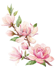 Watercolor magnolia floral composition