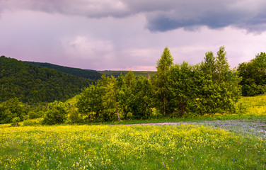 grassy meadow on the hillside. lovely nature scenery in mountains