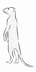 meerkat illustration, vector draw