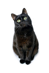Black cat is sitting on a white background