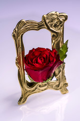 Red rose in frames white