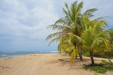 Sandy beach with coconut trees on the Caribbean coast of Costa Rica, Puerto Viejo de Talamanca, Central America
