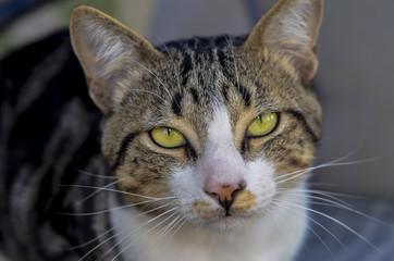 Gato com olhos fortes