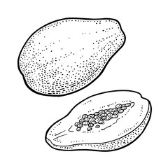 Whole and half papaya. Vector vintage engraving color