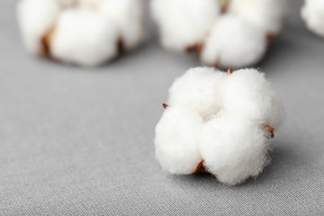 Cotton flower on fabric, closeup