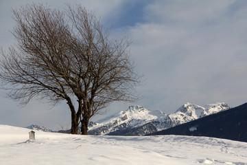 ciliegi spogli e cime innevate del Lagorai; Val di Fiemme, Trentino