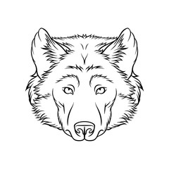 Sketch of wolfs head, portrait of forest animal black and white hand drawn vector Illustration