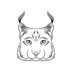 Sketch of lynx head, portrait of wild serval cat animal black and white hand drawn vector Illustration