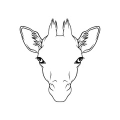 Sketch of giraffes head, portrait of forest animal black and white hand drawn vector Illustration