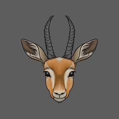 Head of antelope, portrait of wild animal hand drawn vector Illustration