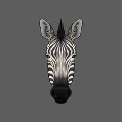 Head of zebra, portrait of wild animal hand drawn vector Illustration