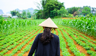 Asian woman wear bamboo rain hat walking in the watermelon field