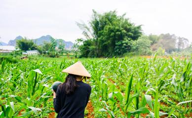 Asian woman wear bamboo rain hat walking in the watermelon field