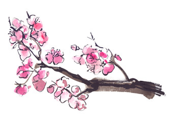 Branch of blooming sakura cherry tree painted in watercolor on clean white background