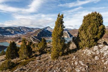 Enebros de incienso y Embalse de Barrios de Luna. Juniperus thurifera.