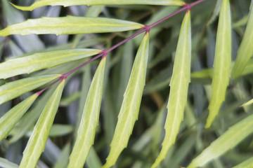 背景素材「緑の植物」