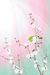初春の白梅とメジロ01