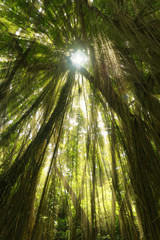 Tropical exotic rain forest jungle sun light rays