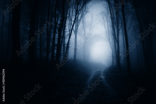 Dark Scary Forest Road At Night Surreal Atmosphere Stock