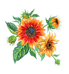 Bouquet of sunflowers, watercolor drawing on white background with clipping path.