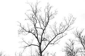 Naked tree branches on a white background