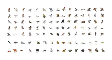 Sammlung sehr natürlicher hochwertiger, vor weissen Hintergrund freigestellte Icons von Tieren Wall mural