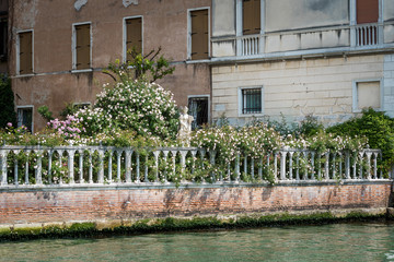 Beautiful garden on the Grand Canal in Venice, Italy