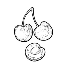 Whole and half cherry berry with seed. Vector vintage engraving color