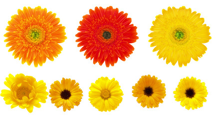 calendula and gerbera  flowers isolated on the white background