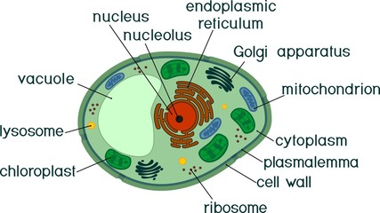 Plant cell structure with titles