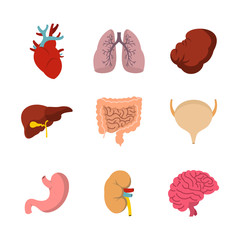 Human internal organ icon set, flat style