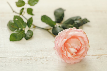 rose flower lies on a wooden table