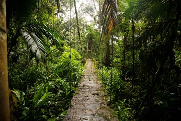 Rain forest, trees and plants