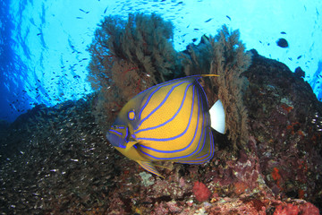 Deurstickers Onder water Fish on underwater coral reef