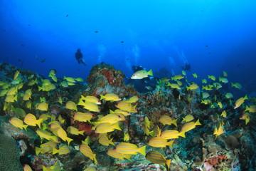 Scuba dive coral reef