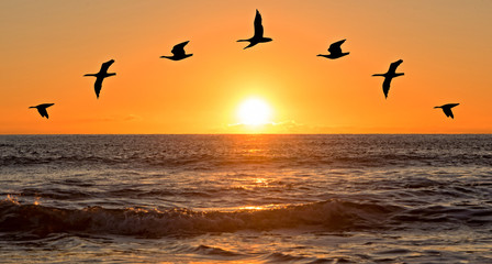 Photo sur Aluminium Dauphins A sunrise on the sea with bird silhouettes
