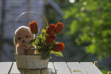 dog doll with red rose In white basket with  sunlight