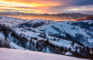 snowy mountainous countryside at sunrise. gorgeous landscape with snow covered hills. beautiful scenery in Carpathian mountains