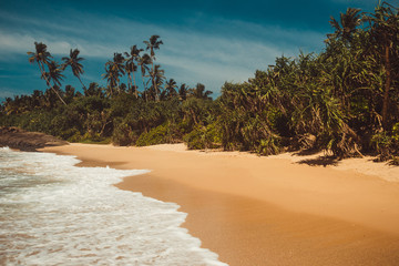 Ocean Coast with pandanus and coconut palm trees. Tropical vacation, jungle on background. Wild deserted untouched beach. Paradise idyllic landscape. Travel concept. Sri Lanka eco tourism. Copy space