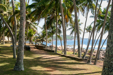 Sunny day. Green shady palm avenue (road) along the beach with large stones boulders. Blue sea, waves, surf.