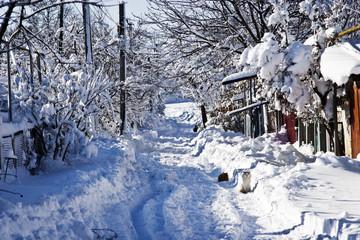 Winter street in the sunlight
